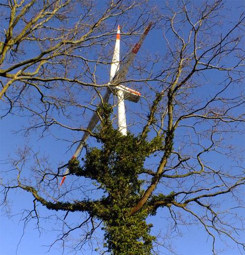Weiterhin Hauptlieferant ist Windenergie aus onshore-Anlagen mit 32.475 MW im Januar / Foto: HB
