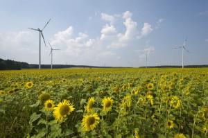 Windpark von Greenpeace Energy / © Marc-Oliver Schulz / Greenpeace Energy eG