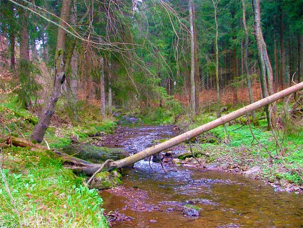 Fläche der naturnahen Wälder in Deutschland wächst / Foto: HB
