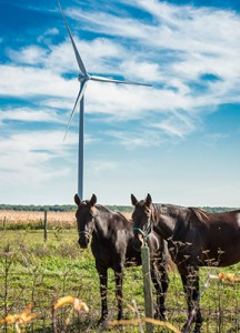 Siemens D3-Windturbinen für kanadisches Projekt bestellt: 220 Kilometer südwestlich von Toronto in der kanadischen Provinz Ontario entsteht das Projekt Grand Bent mit 40 direkt angetriebenen Anlagen vom Typ Siemens SWT-3.2-113.