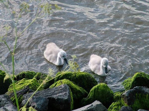 Pestizide, Herbizide und Fungizide gelangen durch den intensiven Einsatz in Flüsse, Seen und Bäche, die Daten deuten auf eine erhebliche ökotoxikologische Beeinträchtigung der Gewässerbiologie hin / Foto: HB