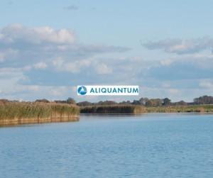 Aliquantum / Huntergrundfoto: HB