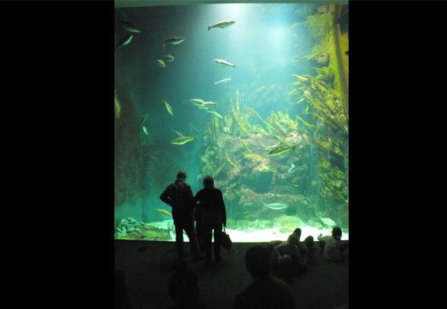 Wattenmeer im Aquarium / Foto: HB