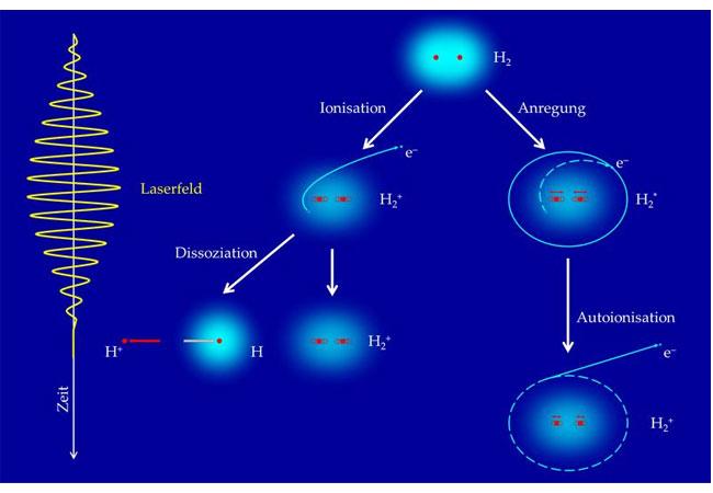 Abb. 1: Reaktionspfade zur Ionisation und Dissoziation von molekularem Wasserstoff in einem intensiven Femtosekunden-Laserpuls. / Grafik: MPI für Kernphysik