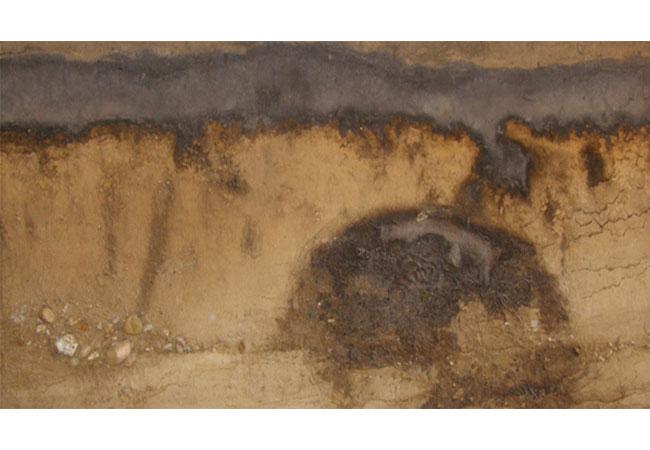 Der Lackfilm eines eemwarmzeitlichen Podsol wird heute an das Geologisch-Paläontologische Museum des Centrums für Naturkunde übergeben. Foto: Gymnasium Heidberg
