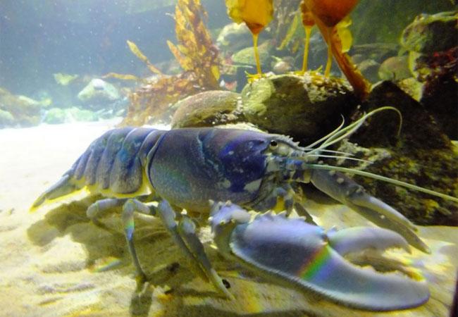 "Einstündige Webinar ""Safe seafood production practices"" / Foto: HB"