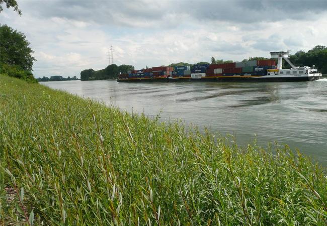 © Foto BAW Weidenspreitlage als naturnahe Ufersicherung am Rhein bei Worms.