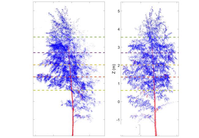 Auch Bäume haben einen Tag-Nacht-Rhythmus / Copyright: Eetu Puttonen