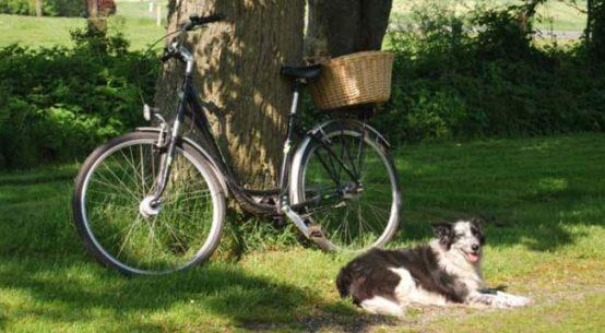 Allerdings sollte diese Regelung dann auch für E-Bikes gelten, deren Strom bisher theoretisch Lohnsteuer- und Sozialversicherungspflichtig ist / Foto: HB