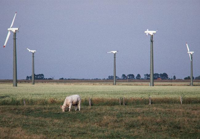 Presssebild: 1988 waren die Windenergieanlagen im Kaiser-Wilhelm-Koog ein vertrauter Anblick, nicht nur für die Anwohner, sondern auch für die Rinder.