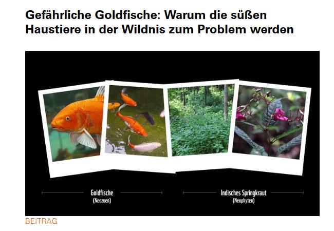 """WWF warnt vor falsch verstandener Tierliebe beim """"Freilassen"""" von Aquariumsfischen / Video: WWF"""