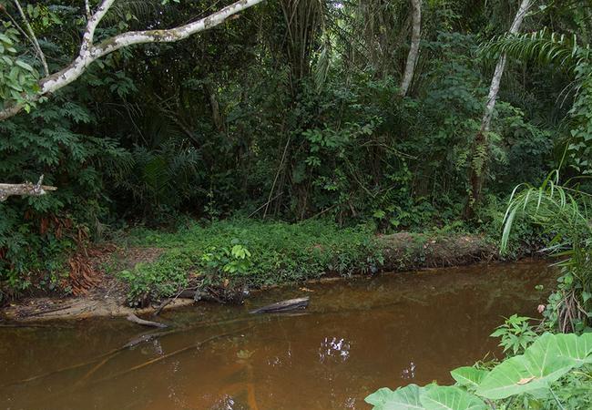 Ein Seitenarm des Kongos im Kongobecken. Das Gebiet ist nicht – wie einst angenommen – komplett mit Regenwald bedeckt, sondern besteht zum Teil aus Sumpfwäldern. / Jordon Hemingway, Woods Hole Oceanographic Institution (WHOI)