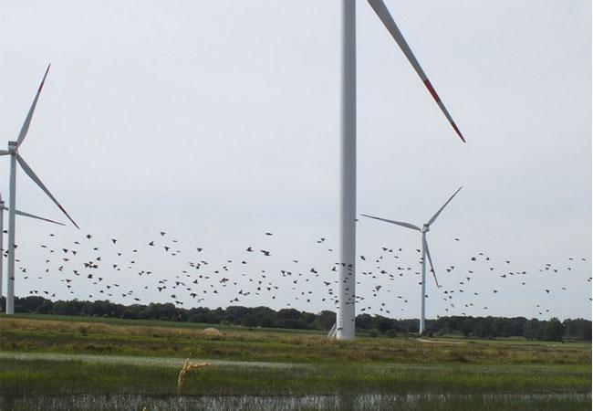 Kollision von Vögeln mit Windenergieanlagen / Foto: HB
